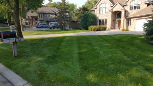 Lawn Care Plymouth